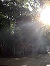 Asamoya