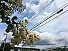 Flower0729