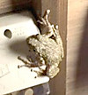 Frog0809