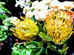 Flower201809