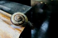 Snail0717