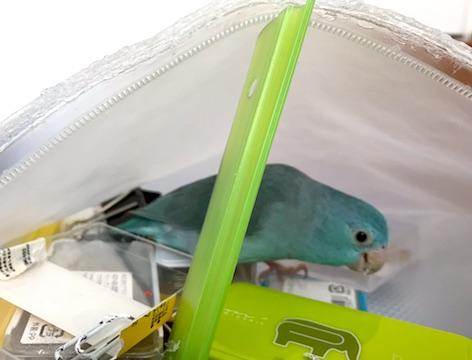 Houseofbird