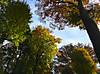 Autumntrees1