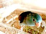 Goodmorningbird