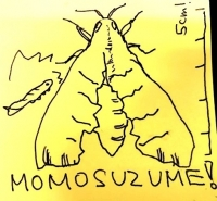 Momosuzume